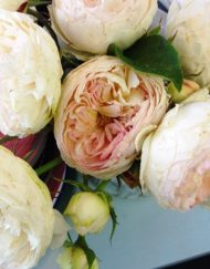 garden roses1
